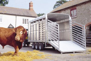 DP120 12 Ifor Williams Livestock, Westwood New Trailers