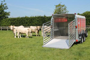 TA510 12 Ifor Williams Livestock, Westwood New Trailers,
