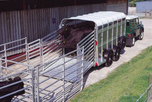 TA5G 12 Ifor Williams Livestock, Westwood New Trailers